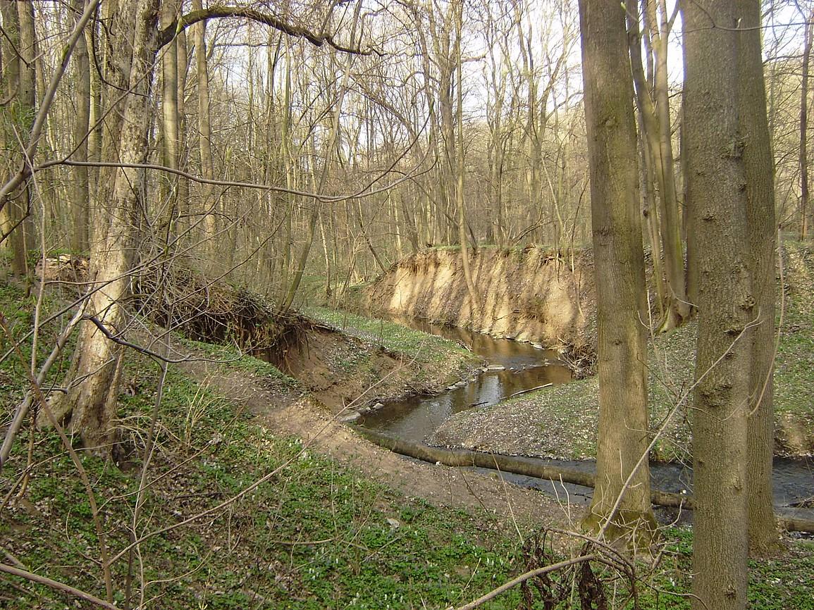 Říčanský potok v uhříněveské oboře